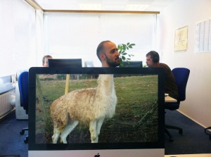 Desk-safari-5